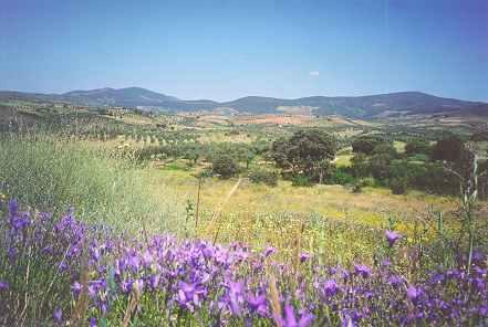 El ecosistema de las praderas